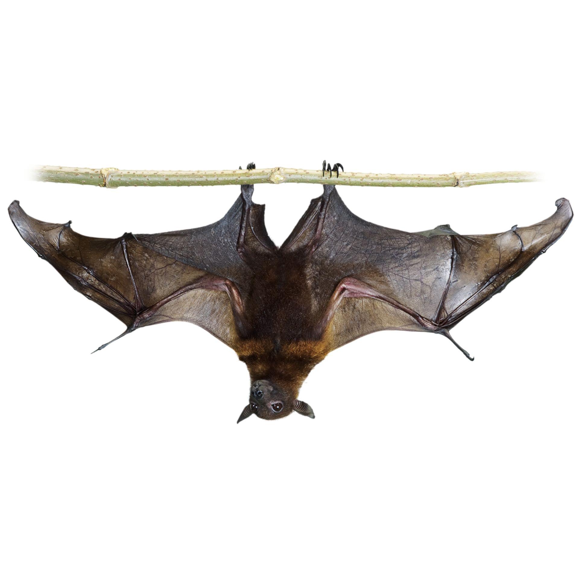 What is a Bat